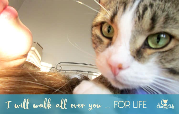 cat walks all over you