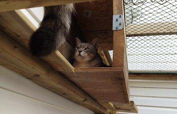 Kitty in condo
