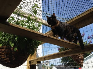 Cat super higway in catio