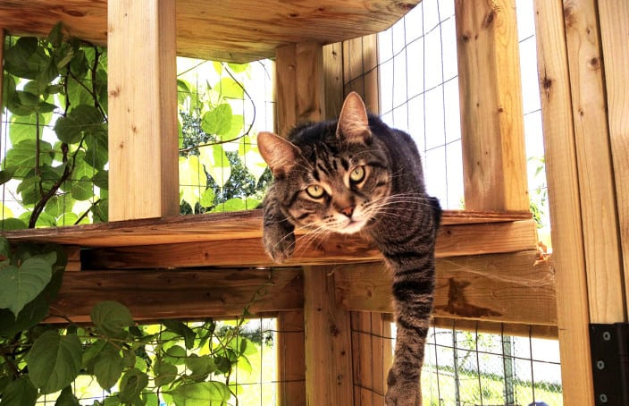 cat hanging out in catio