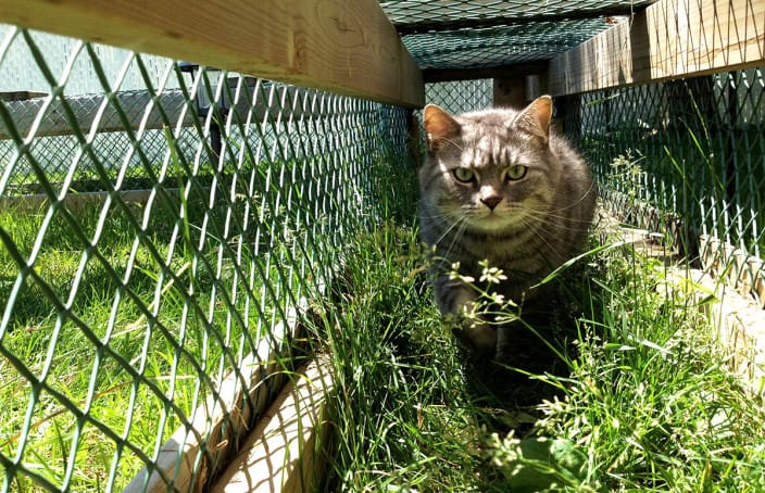 Mr jack the cat, in tunnel