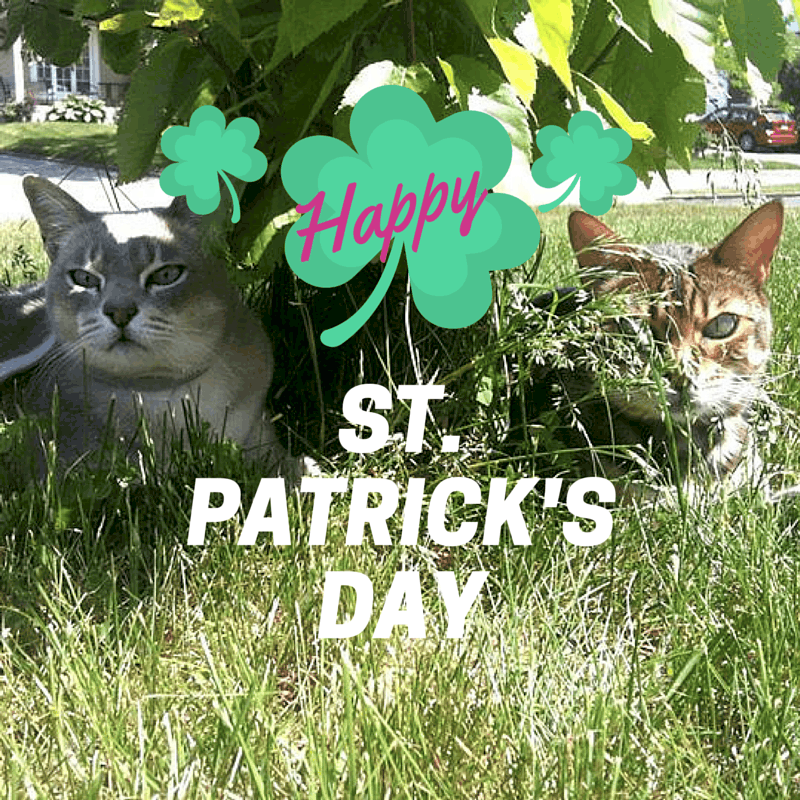 St. Patricks's Day kitties