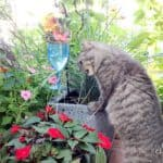 How to create a safe cat garden your cat can't resist