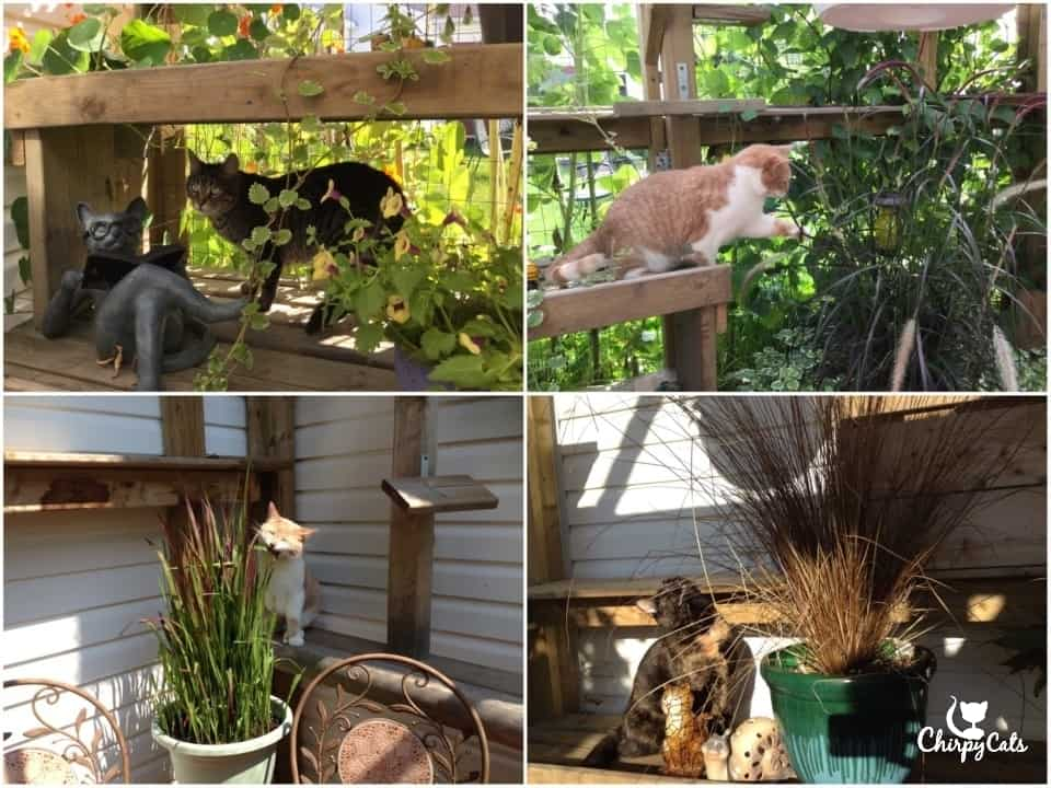 Cats love grazing on grass and these are plants safe for cats to eat