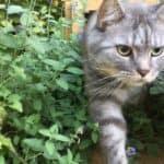 Mr Jack the cat has reached his destination