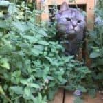 Mr Jack the cat is hesitant