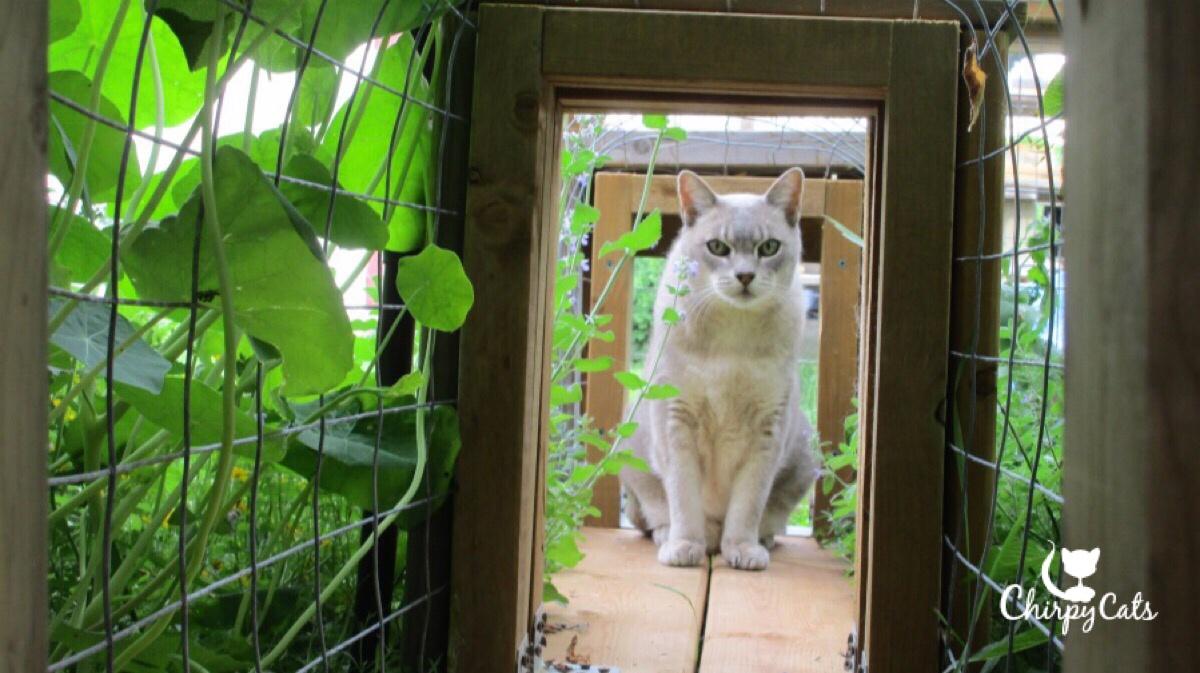 Resting cat in tunnel