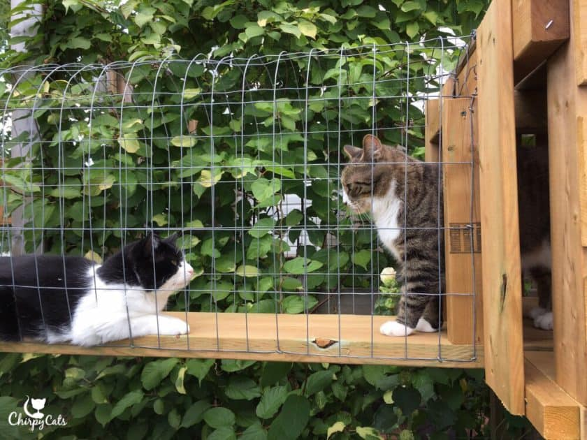 Two cats meet at the tunnel