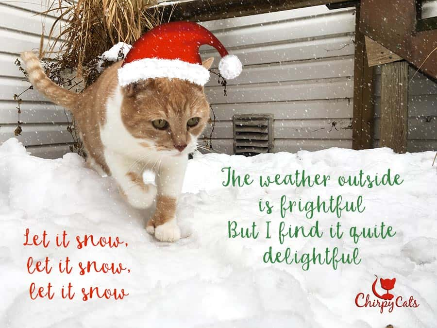 Jimmy the cat love the snow