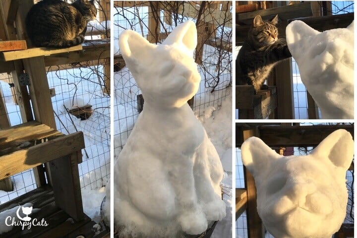 Ollie the cat with cat ice sculpture