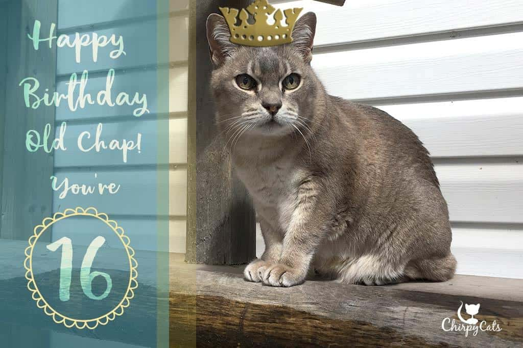 Senior cat turns 16