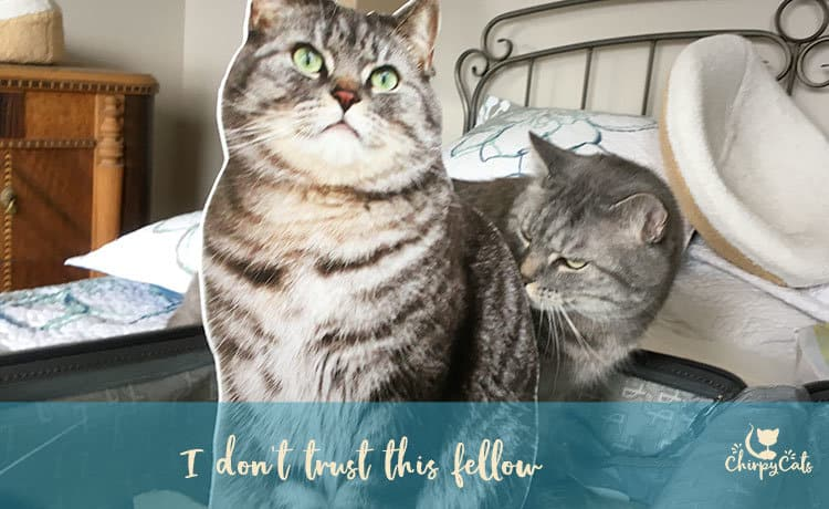 Cat sniffing his doppelganger