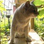 senior cat smelling leaves