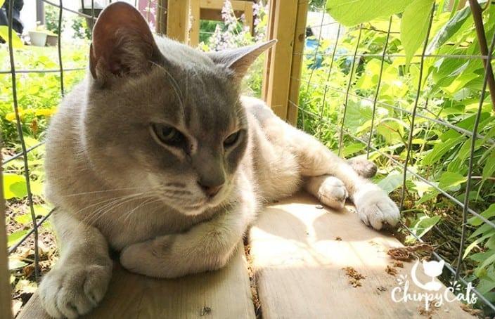 resting senior blind cat