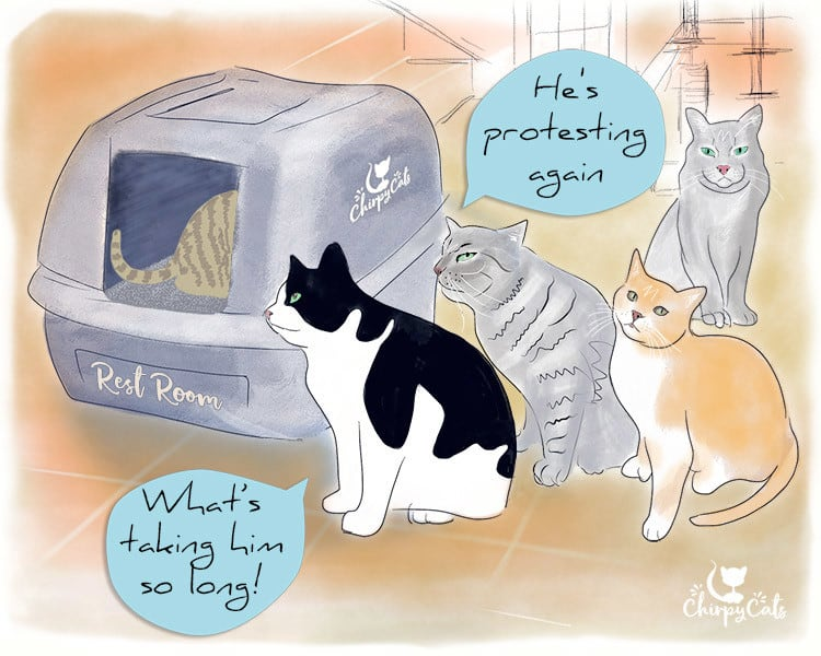 Multiple cats waiting in line to use the litter box