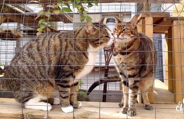 cat kisses and grooms