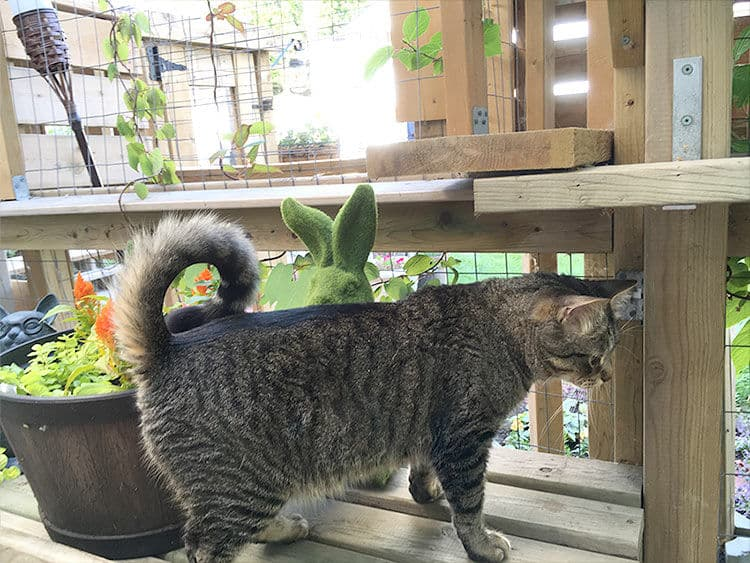 """Mr """"Curly Tail"""" Baggy will charm you with his curly tail."""