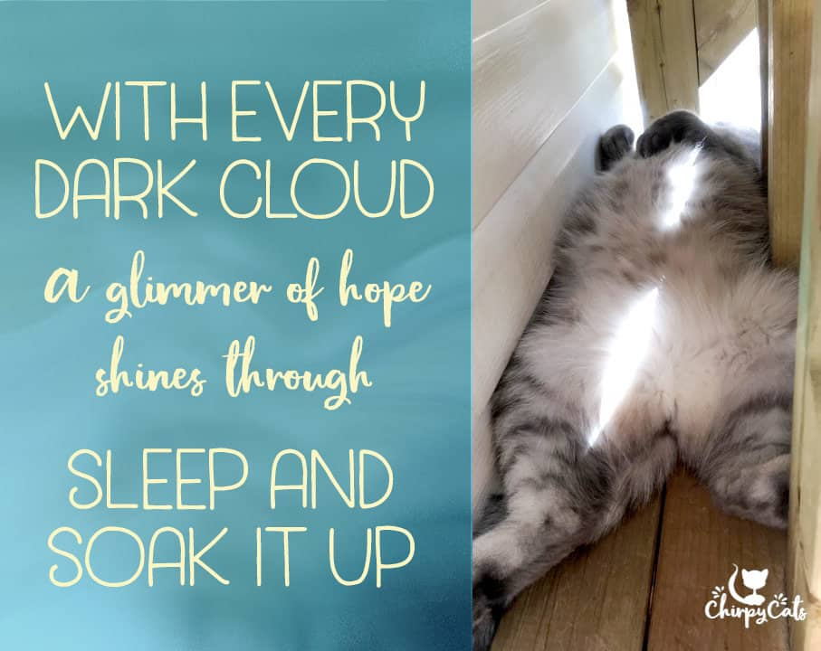 sleeping cat in condo