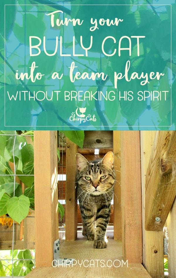 7 Tips to turn your bully cat into a team player.