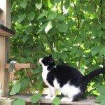 bush dwelling cat goes up