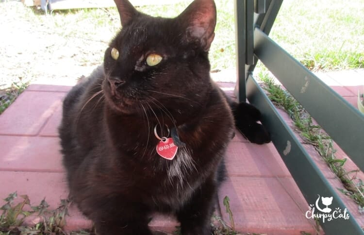 black cat with red tag sitting on patio