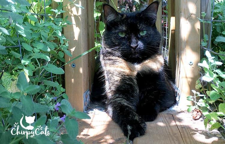tortie cat scout alert eyes