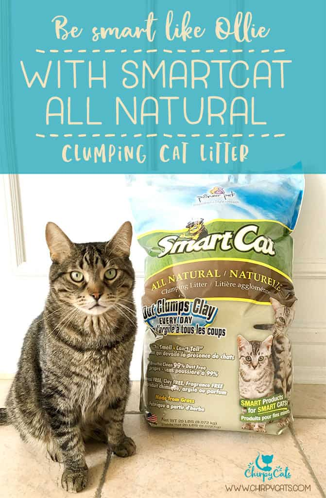 smart cat all natural cat litter
