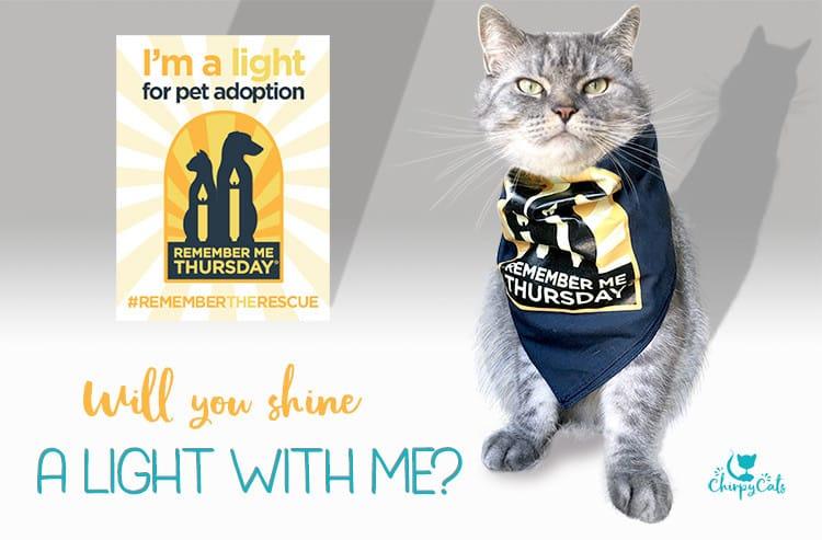 Remember Me Thursday cat shines a light for pet adoption