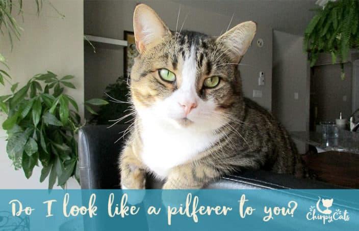 innocent looking cat