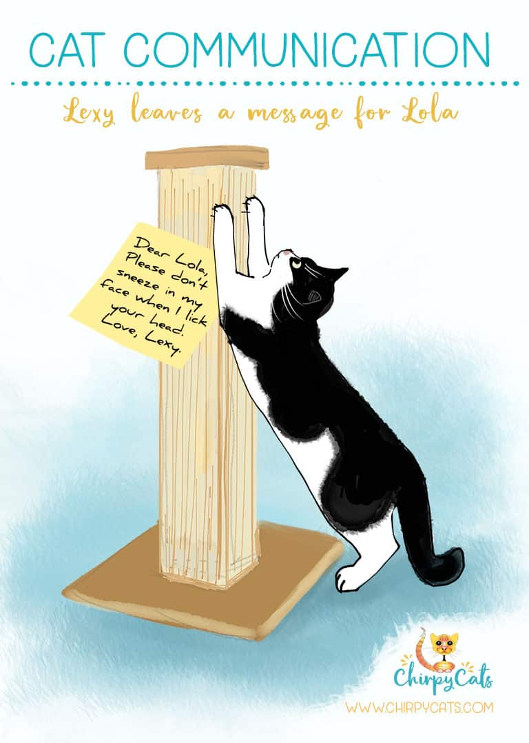 Cat Communication is sophisticated, yet really simple. Cats don't need opposable thumbs to get their messages across. They scratch their sticky note texts on their scratching posts to leave their unique scent and message.