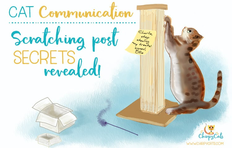 cat communication and scratching post cartoon