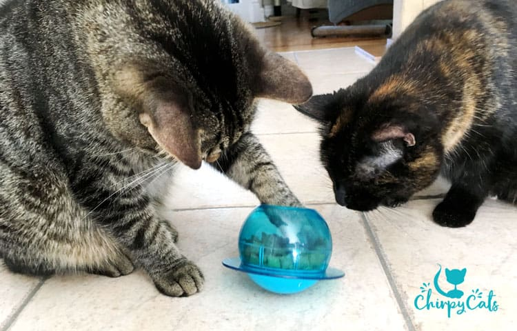 Two cats playing with the Petsafe food puzzle fish bowl toy with paws grabbing food