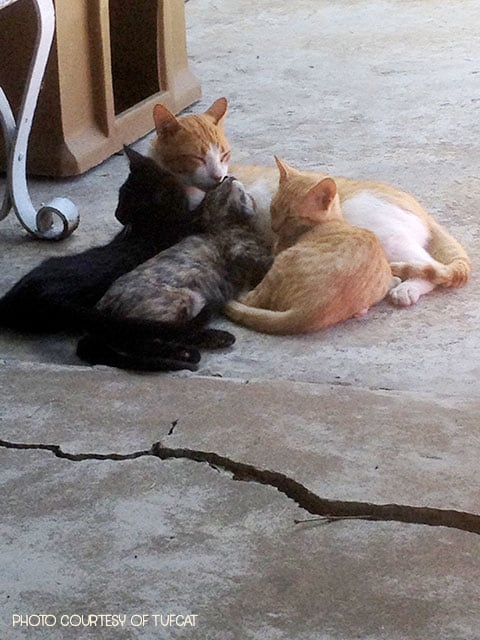 mr. spunky and his kittens