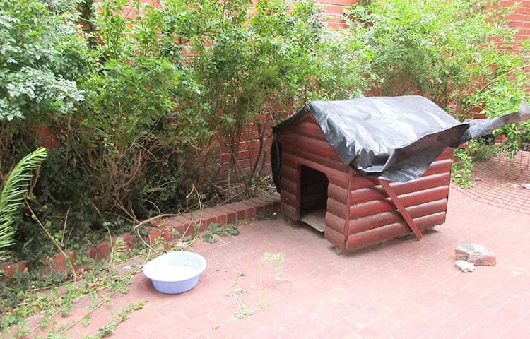 cat house for feral cat