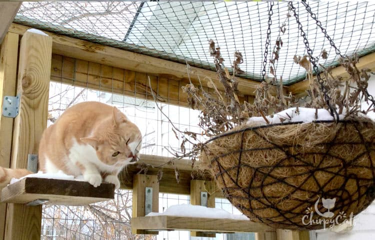 winter catnip hanging basket