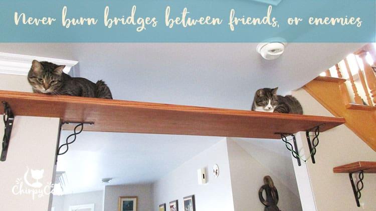 cat bridge in multi-cat household