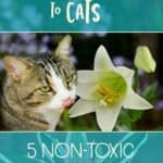 Easter lilies are deadly toxic to cats, but are there cat-safe alternatives?