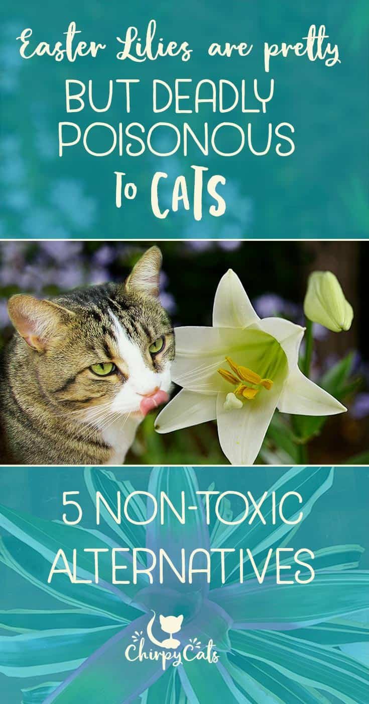Lilies are toxic to cats, but what are the alternatives