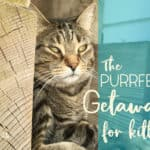 Meowvelous Monday Haiku: The Purrfect Getaway For Your Cat