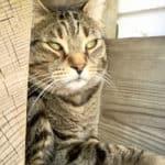 cat sitting in condo