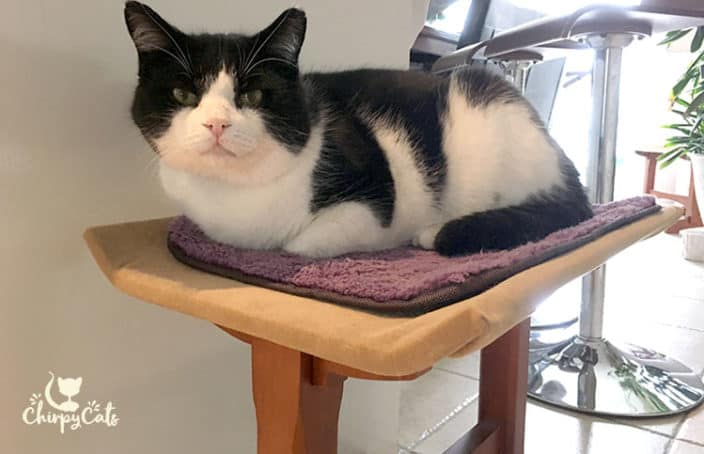 indoor cat sitting on bench
