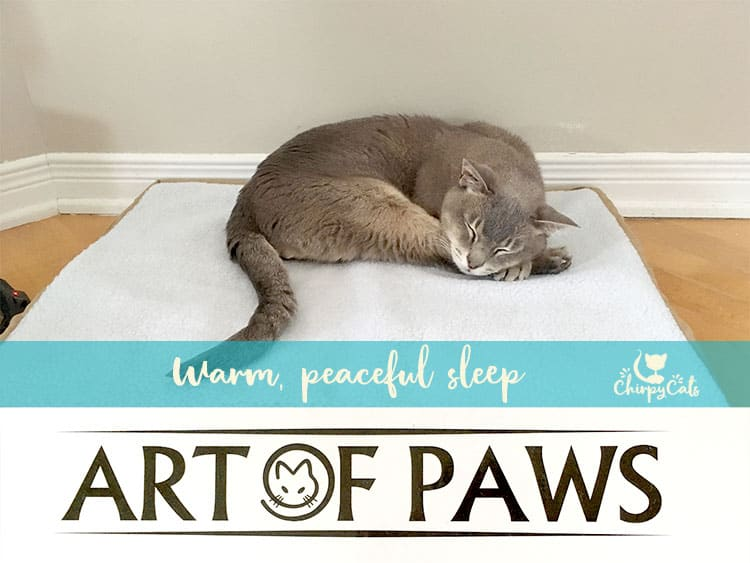 Art of Paws heated cat bed is perfect for year-round cuddly snoozes.