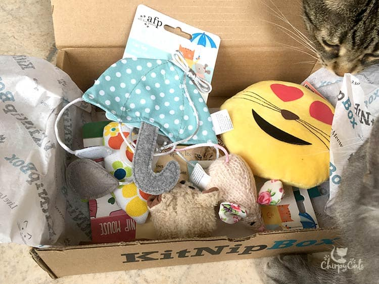 Chirpy Cats are overwhelmed with their KitNipBox toys!