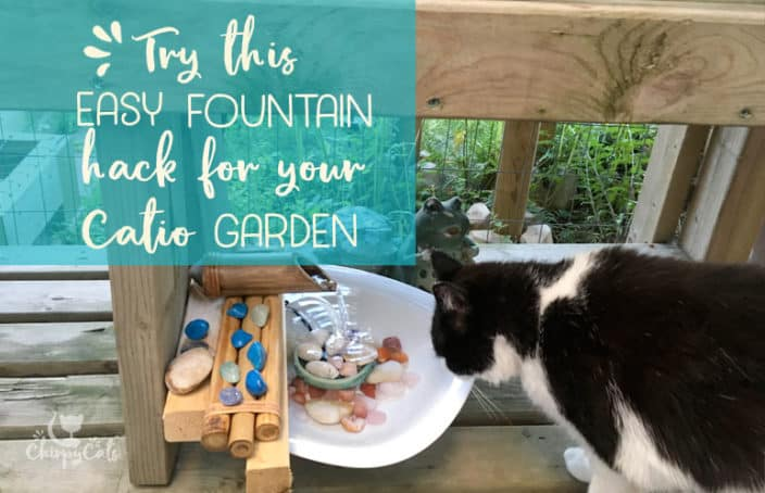 cat drinking fountain hack for cats