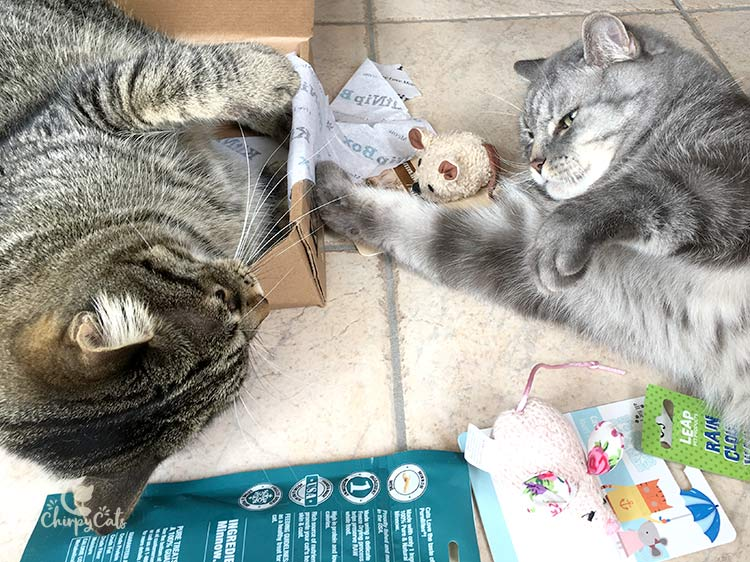 The Chirpy Cats test their new toys from the KitNipBox