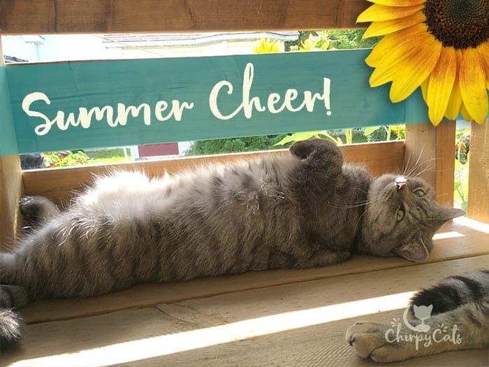 Sunflowers bring Summer cheer