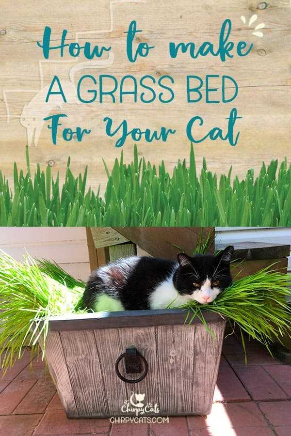 How to make a grass bed for your cat