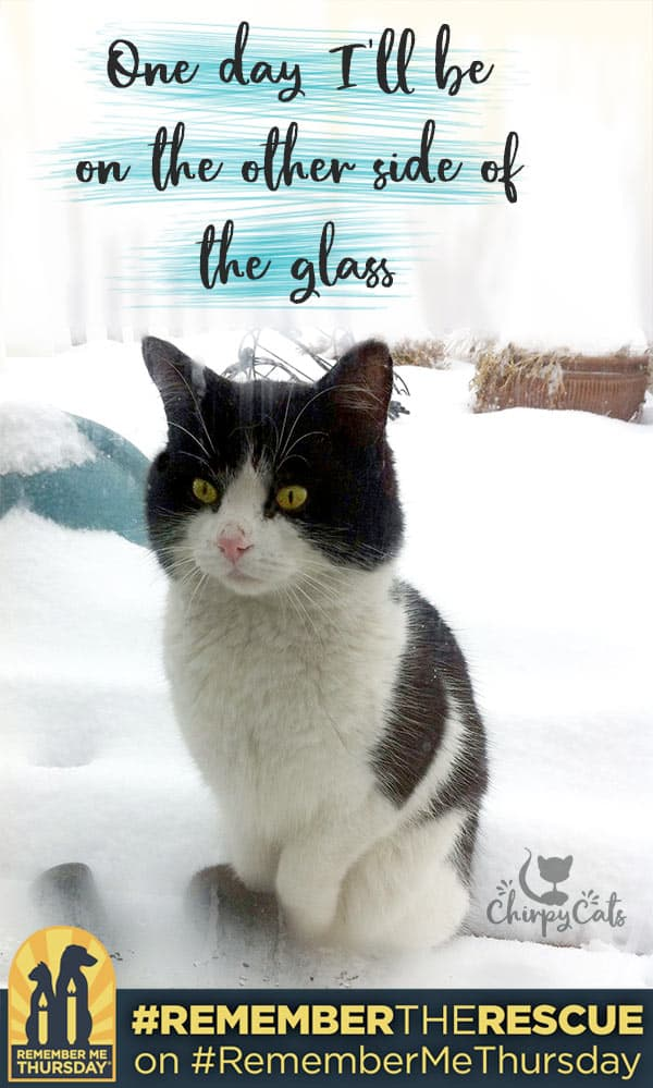 How one cat made it to the other side of the glass. He asked politely for a forever home, and was granted his wish.