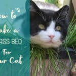 How to make the perfect cat bed for afternoon catnaps