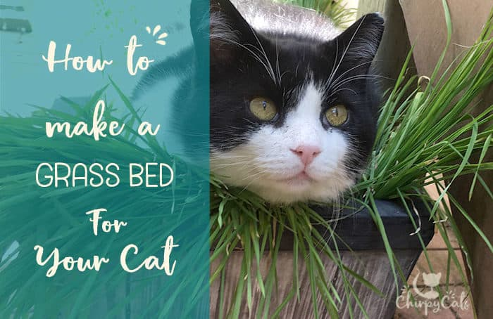 A cat grass bed for your Kitty